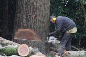 bomen kappen Ede